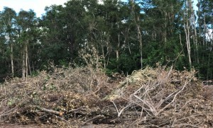 Estero debris drop-off