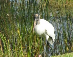 Estero Marsh Preserve