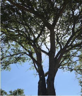 Tree Protection Ordinance